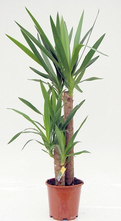 Plantas de interior y exterior san jorge decoraci n verde - Plantas de exterior con flor ...