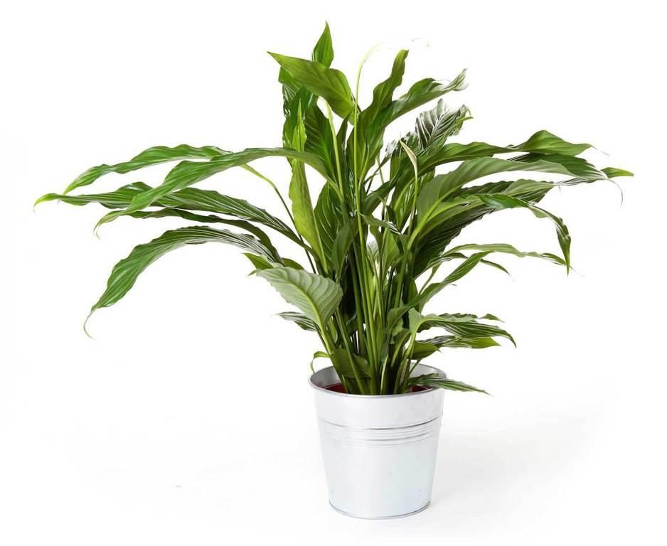 Plantas de interior y exterior san jorge decoraci n verde - Plantas de exterior baratas ...