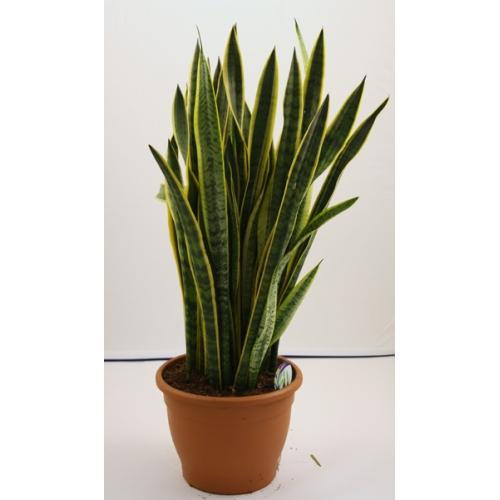 Plantas de interior y exterior san jorge decoraci n verde - Plantas de exterior ...